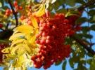 Осенний юбилей